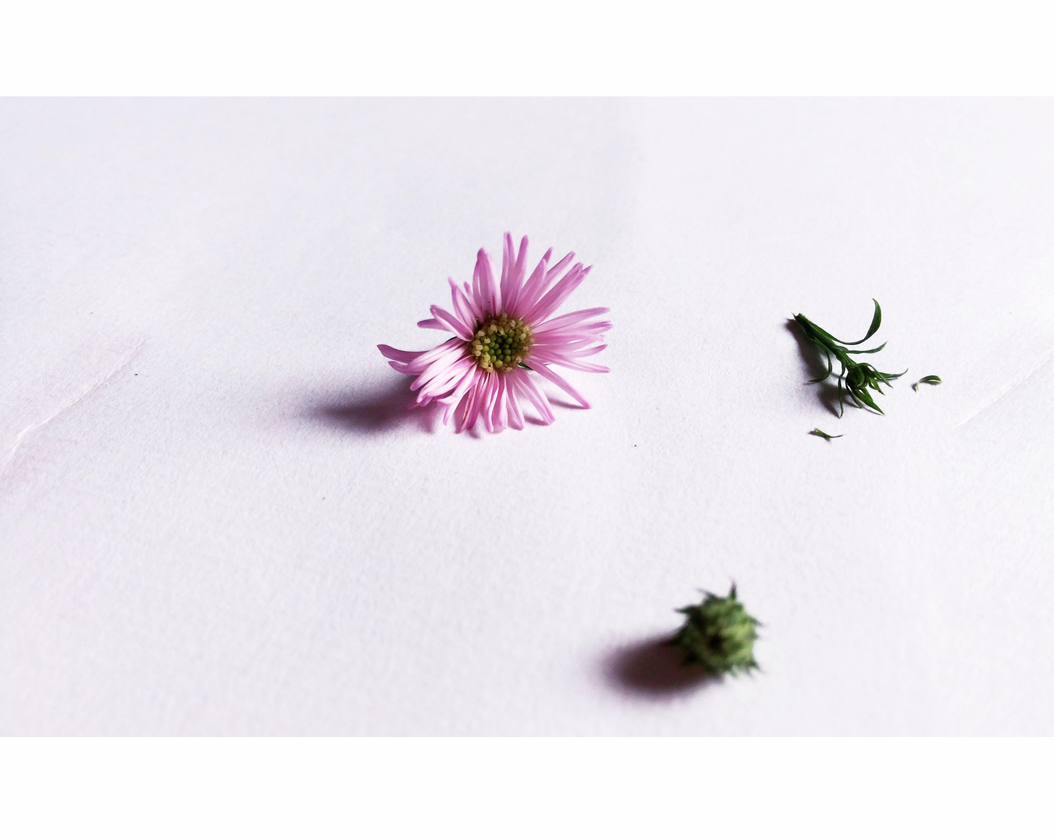 Δωρεάν στοκ φωτογραφιών με polaroid, λευκός, μαργαρίτα, πράσινος