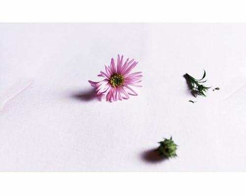 Základová fotografie zdarma na téma bílá, fotografie, polaroid, sedmikráska