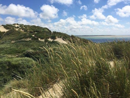 구름, 녹색, 모래, 물의 무료 스톡 사진