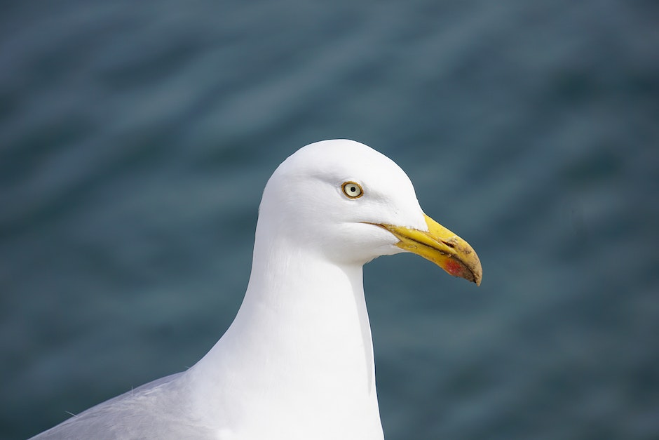 White and Gray Seagull