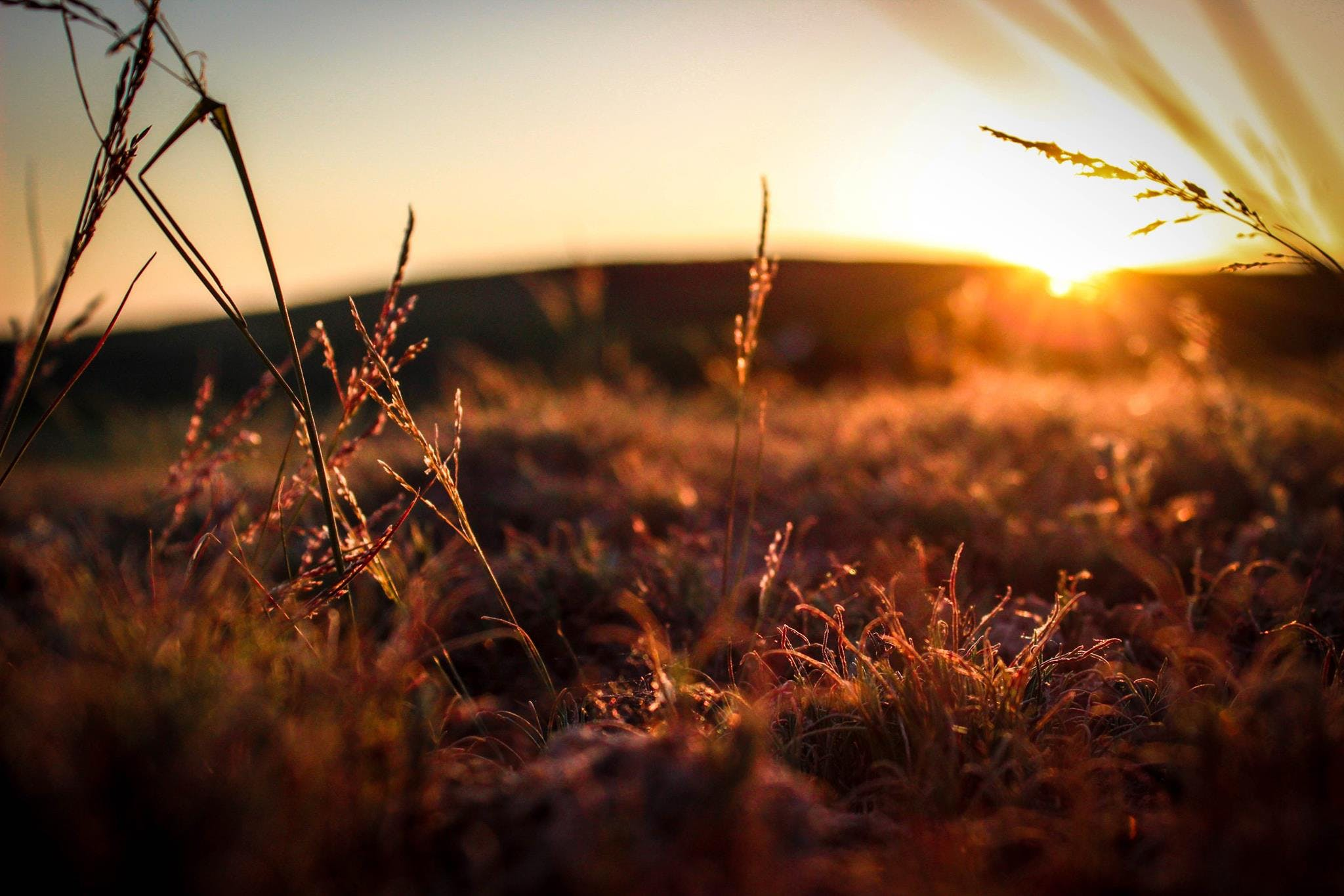 field, grass, sunrise
