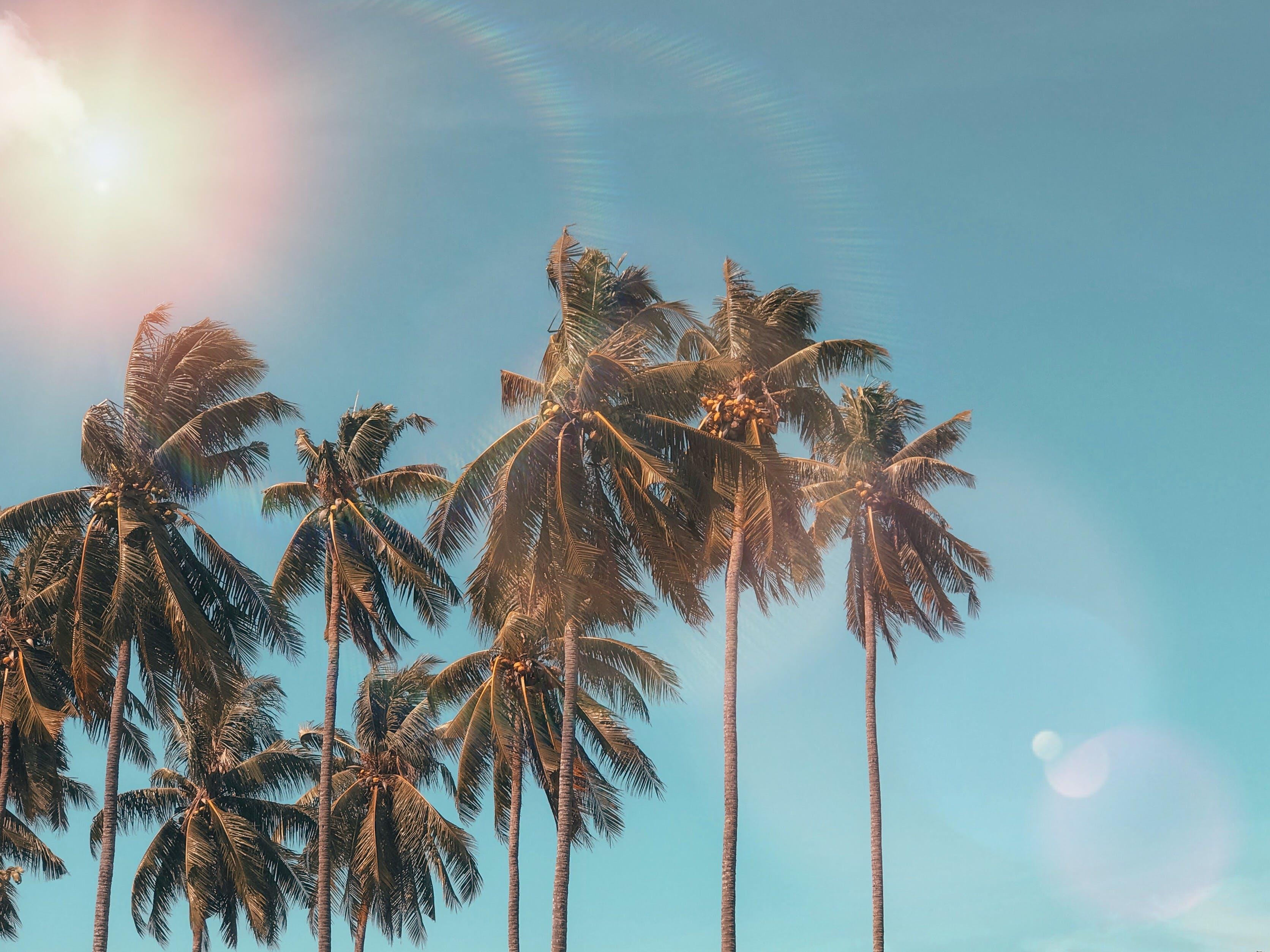 coconut, dawn, daylight