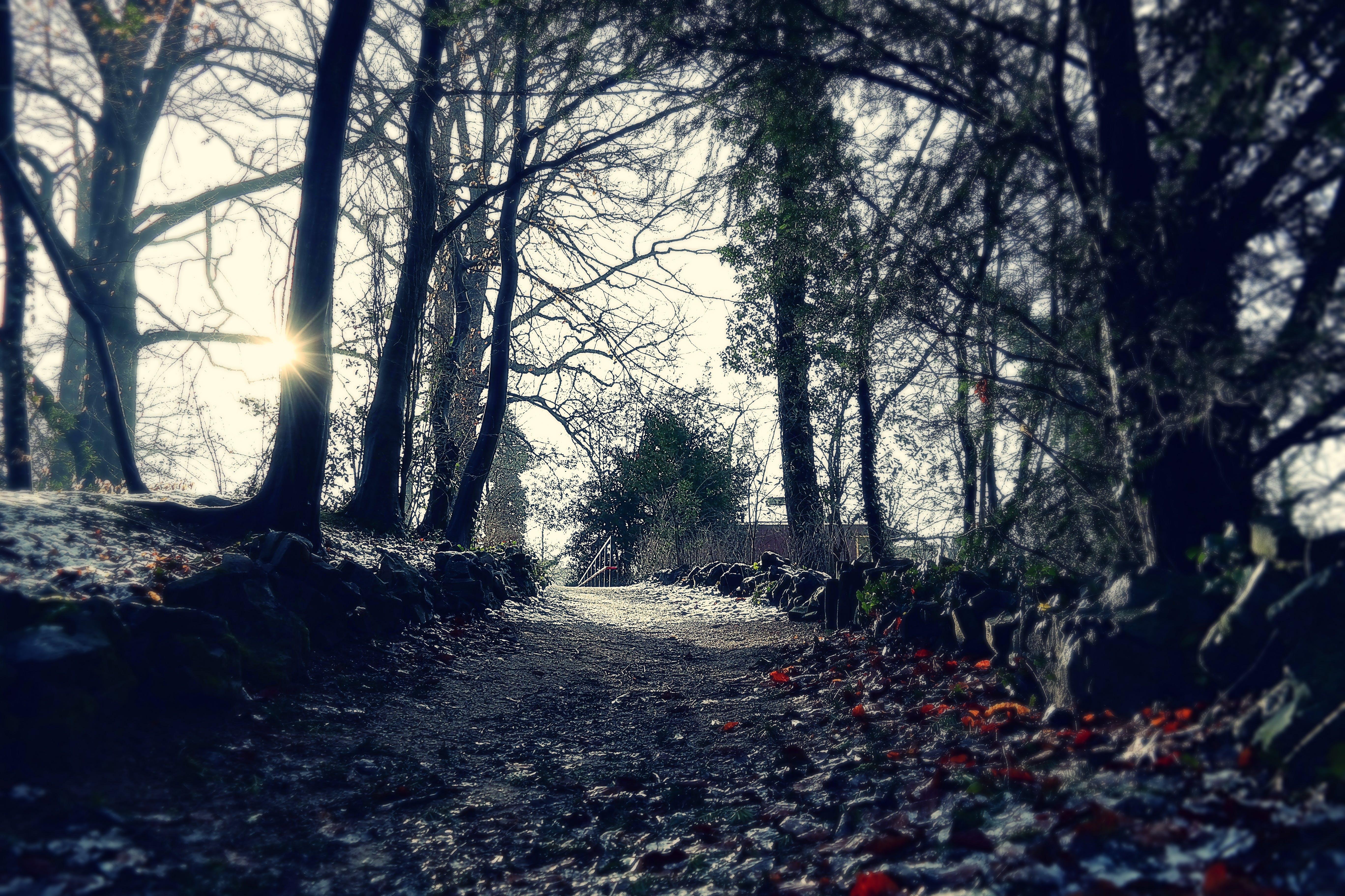 Darmowe zdjęcie z galerii z droga, drzewa, las, natura