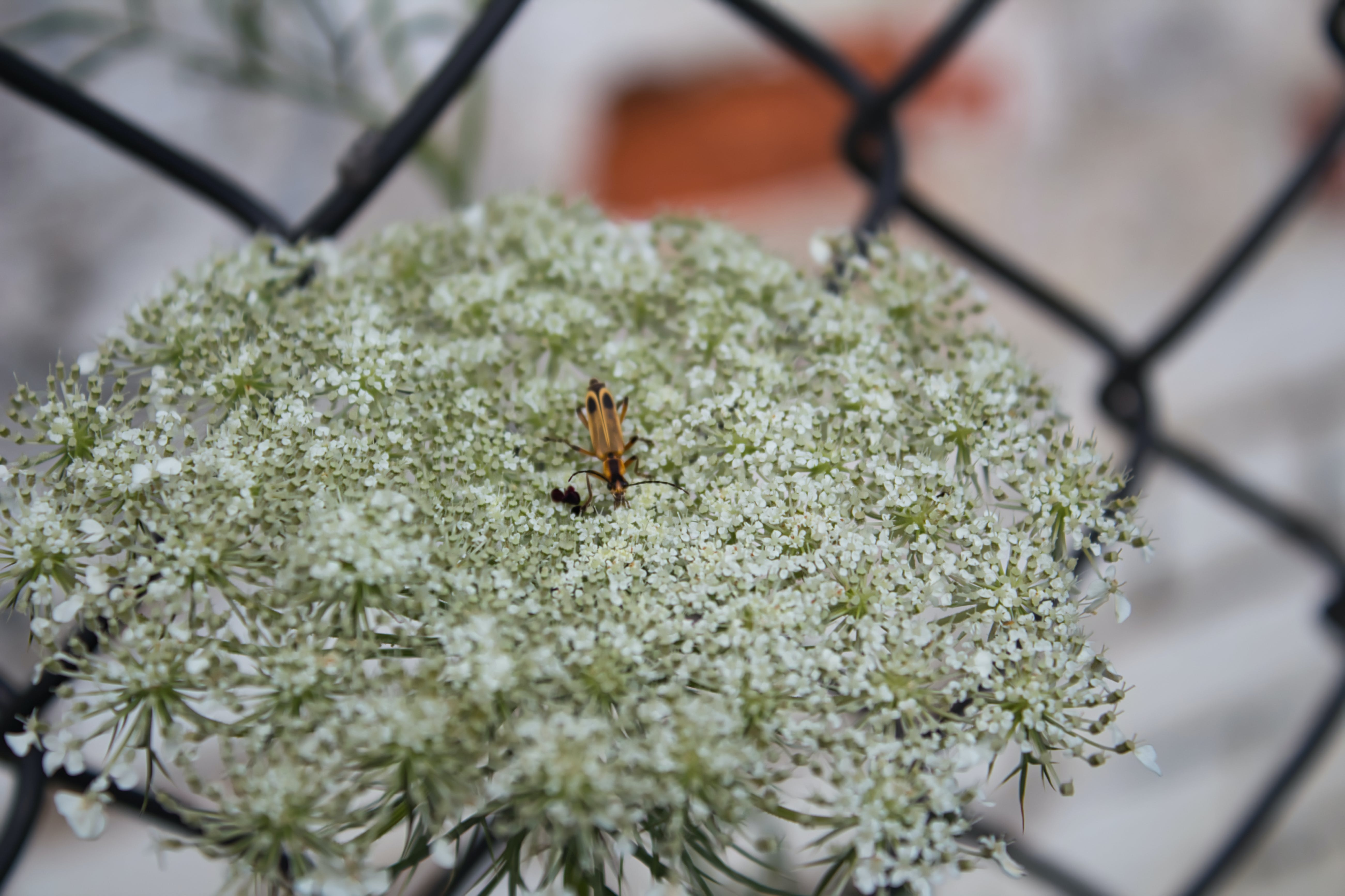 Free stock photo of white, flower, insect, macro