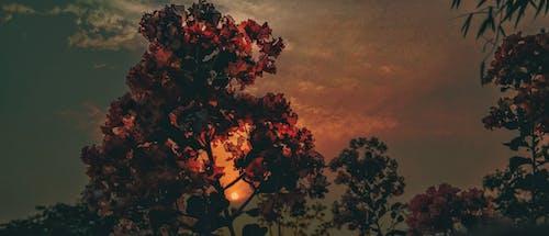 bulutlar, Çiçek demeti, dar açılı çekim, dar açılı fotoğraf içeren Ücretsiz stok fotoğraf