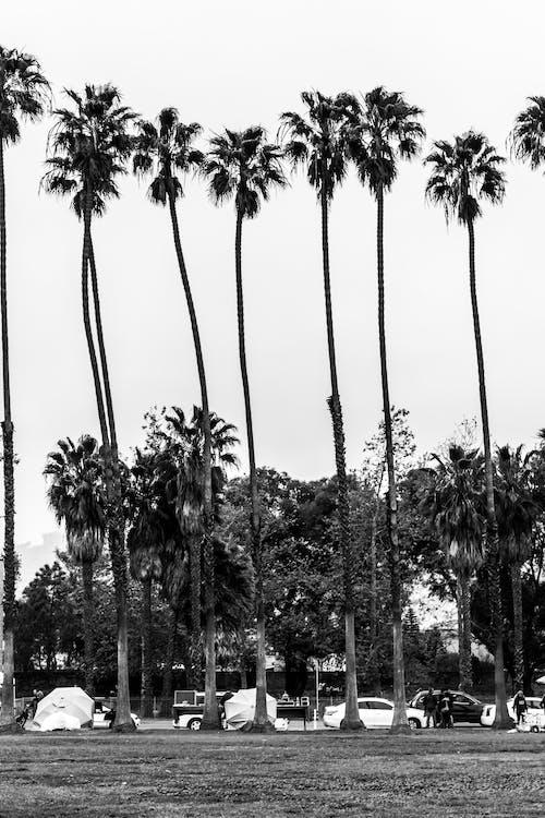 Ilmainen kuvapankkikuva tunnisteilla 4k taustakuva, palmupuut