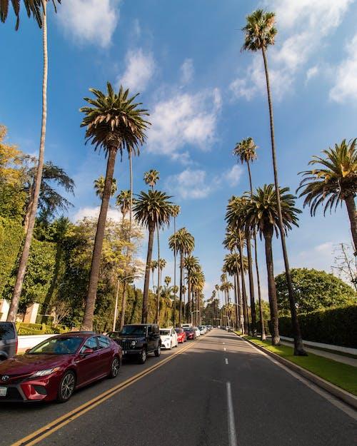 Kostnadsfri bild av bakrund, gator, Los Angeles, Palmer