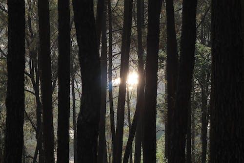 眩しい太陽, #森林の無料の写真素材