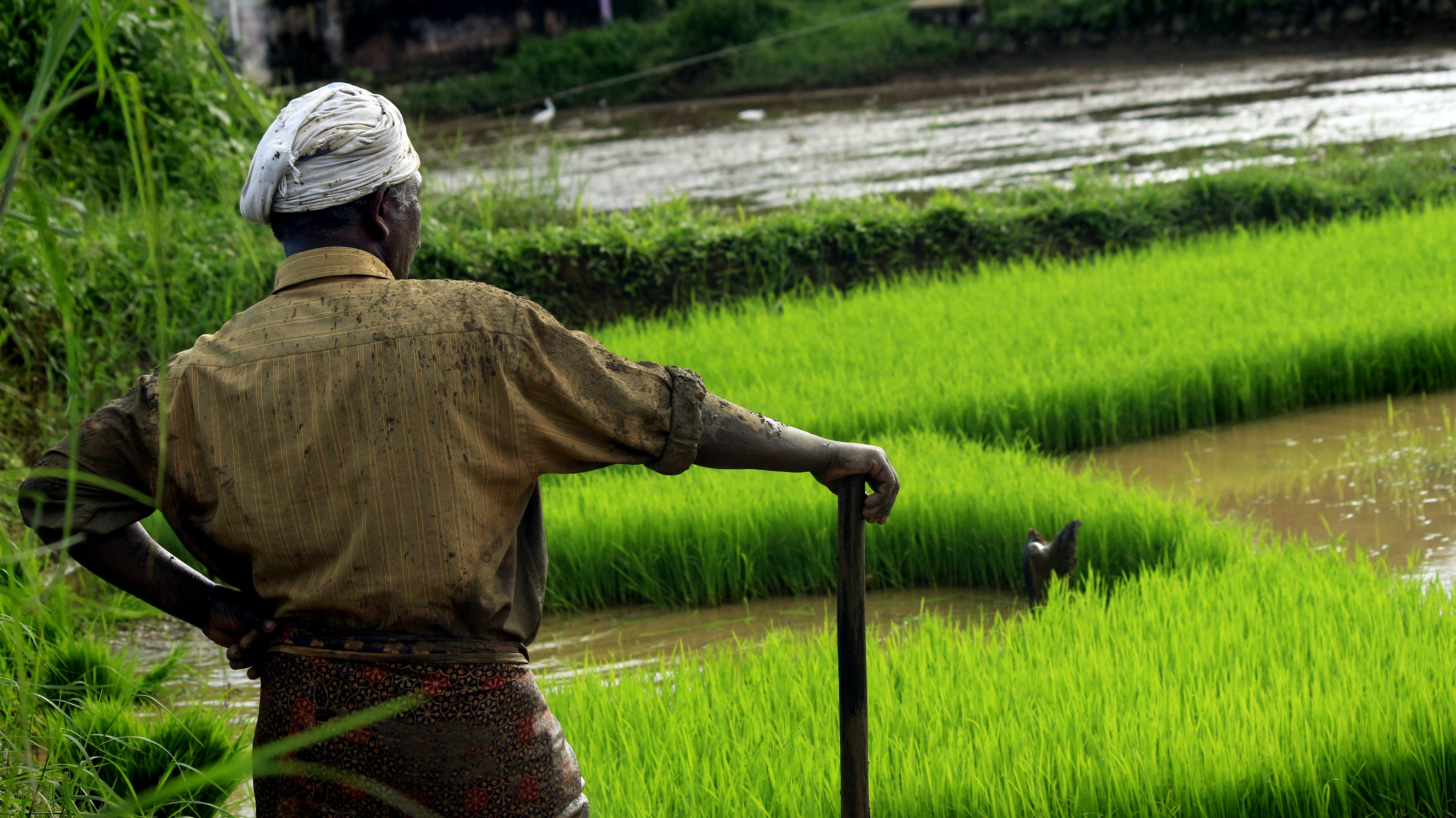 agriculture, asia, beautiful