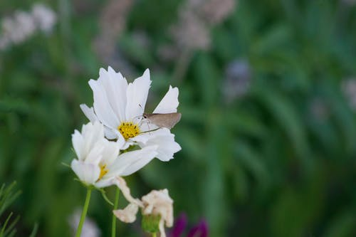 Free stock photo of daisy, flower, flower with moth, garden