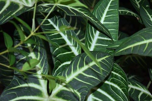 คลังภาพถ่ายฟรี ของ ขาว, ธรรมชาติ, สีเขียว