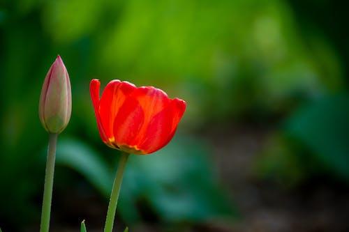 Foto d'estoc gratuïta de assolellat, estiu, flor, florir