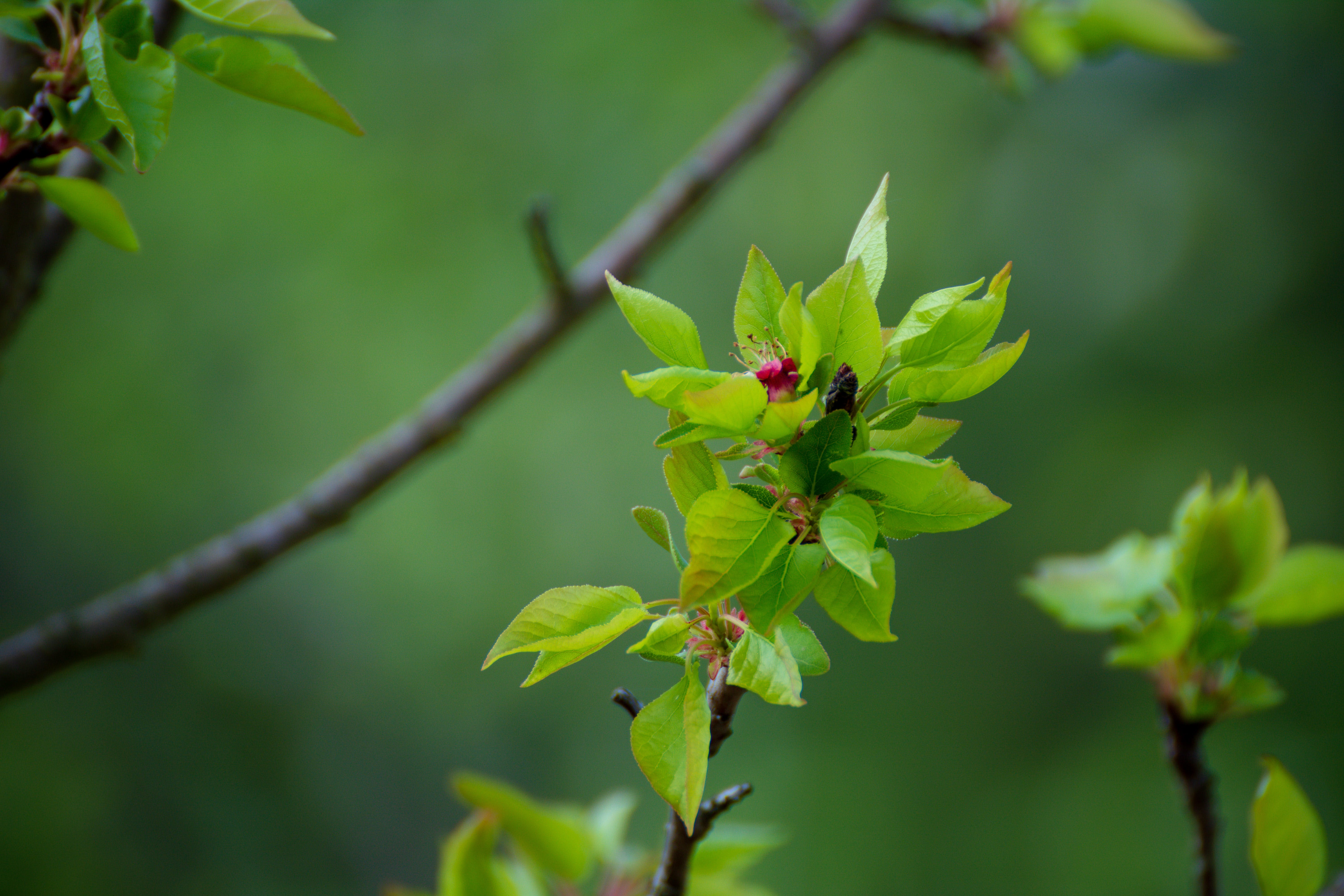 Free stock photo of blossom, bokeh, branch, detail