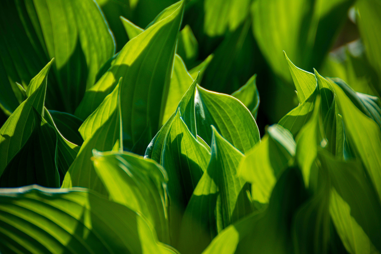 Foto d'estoc gratuïta de biologia, botànic, canna lily, creixement