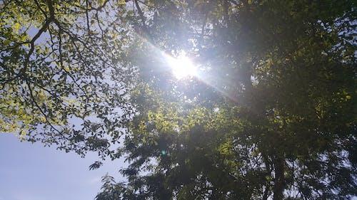 Free stock photo of green, sky, sunlight