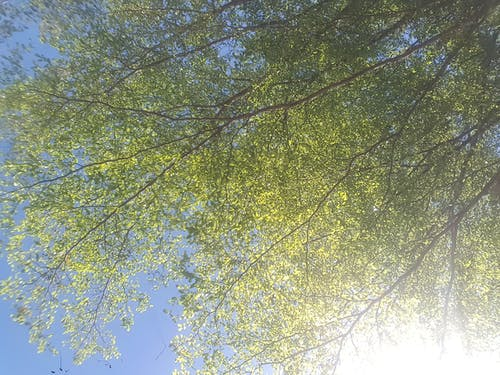 Free stock photo of green, photography, sky