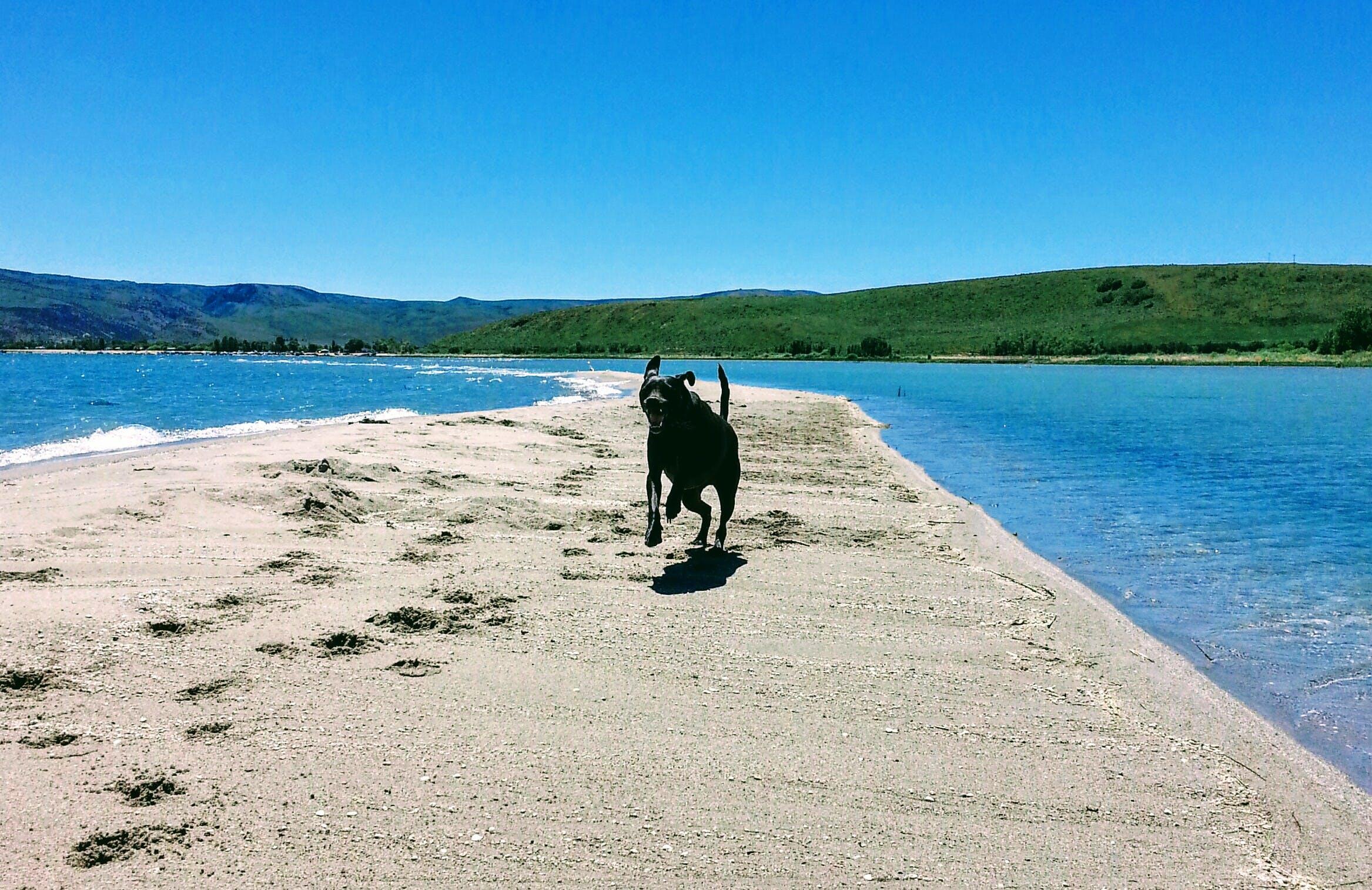 Free stock photo of #dog, beach, beautiful, black dog