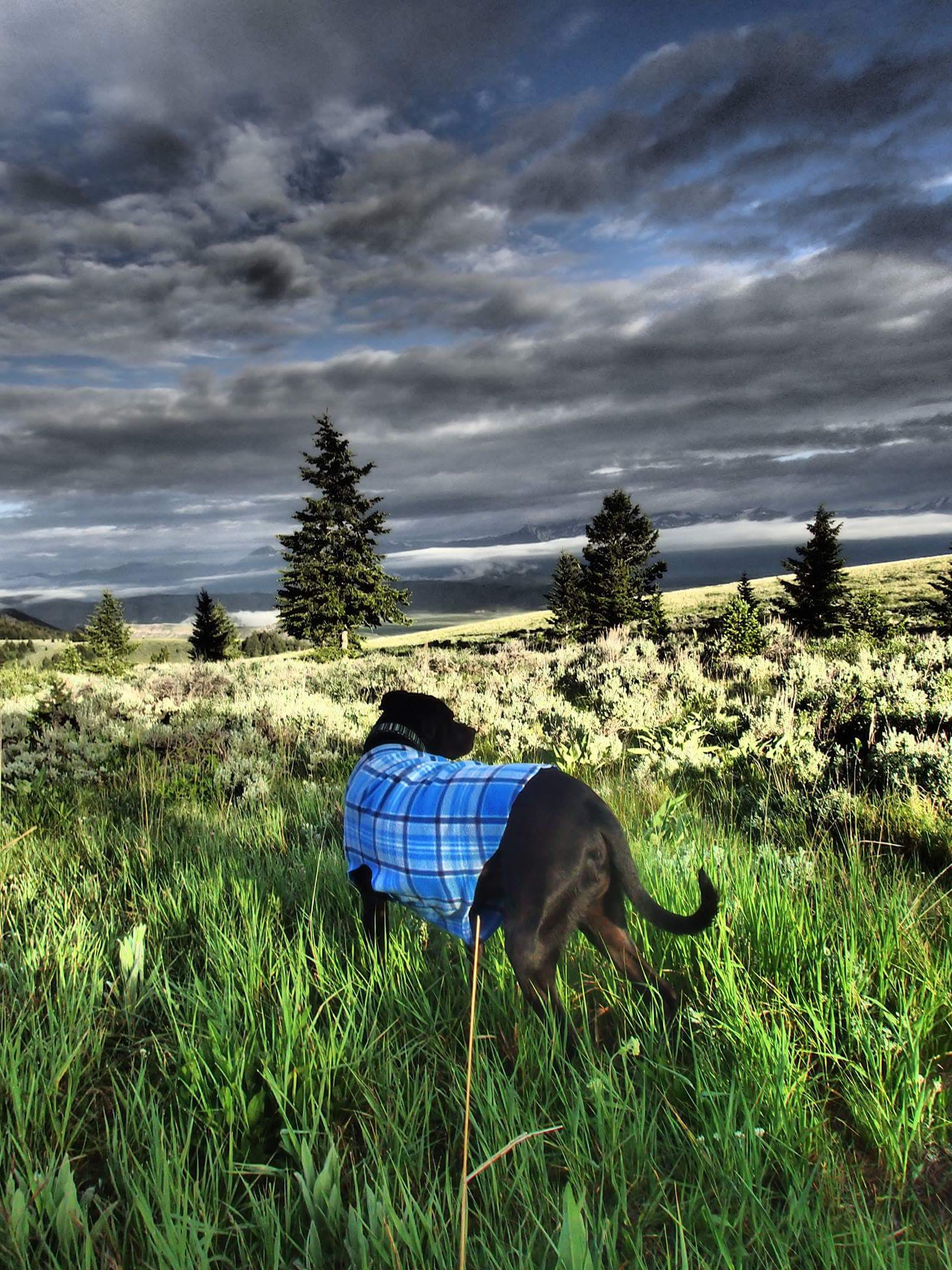 Free stock photo of #dog, camping, couds, field