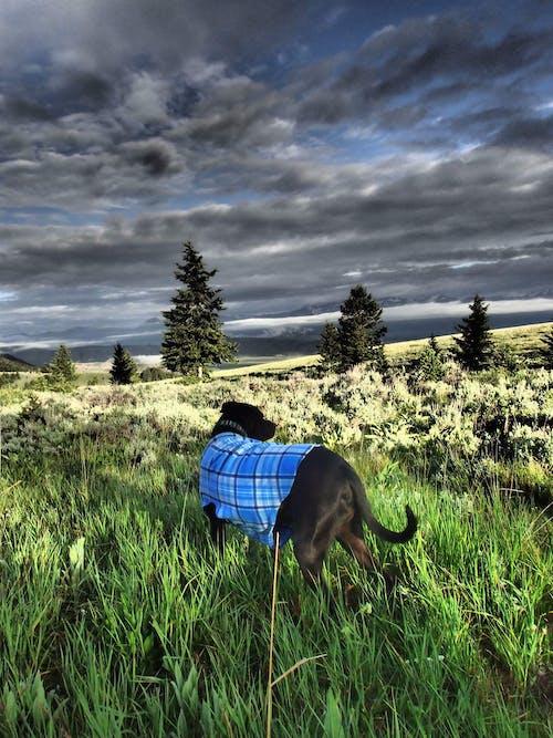 Gratis lagerfoto af #dog, bane, bjerge, Camping