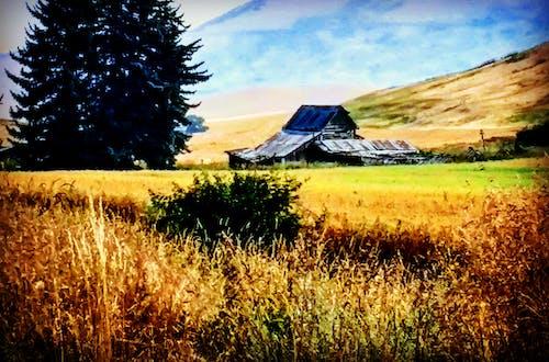 Gratis lagerfoto af bane, fall felt, fredelig, gamle gård