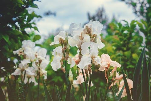 Darmowe zdjęcie z galerii z biały, kwiat, piękno, rośliny