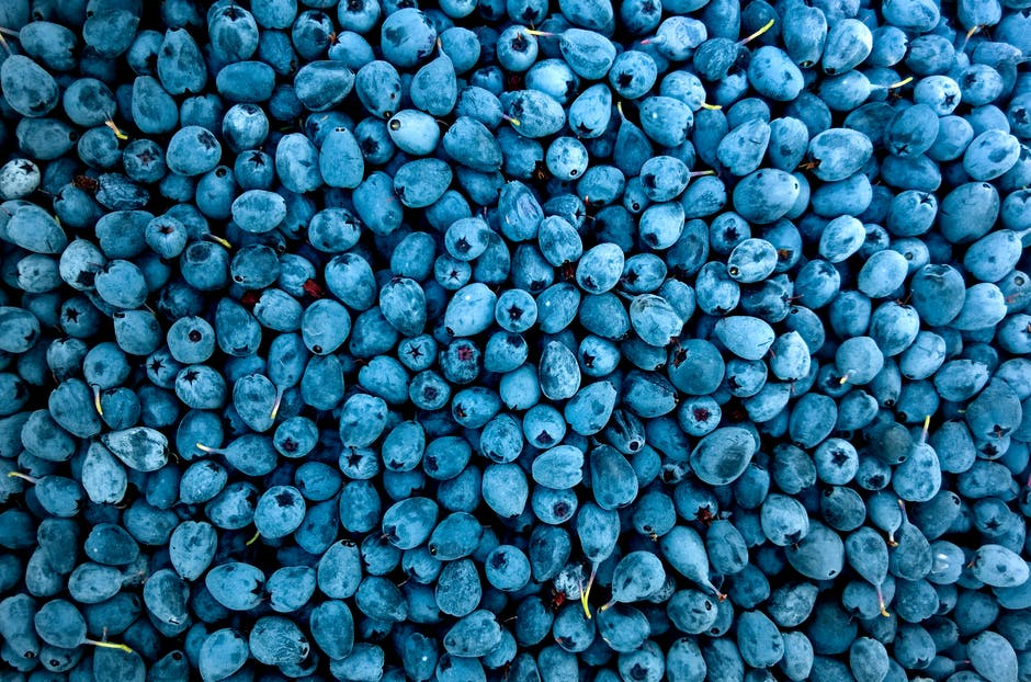Abundance berries blueberries close up