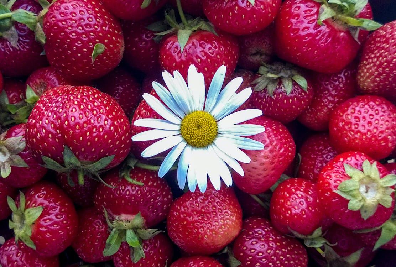 blomst, bær, jordbær