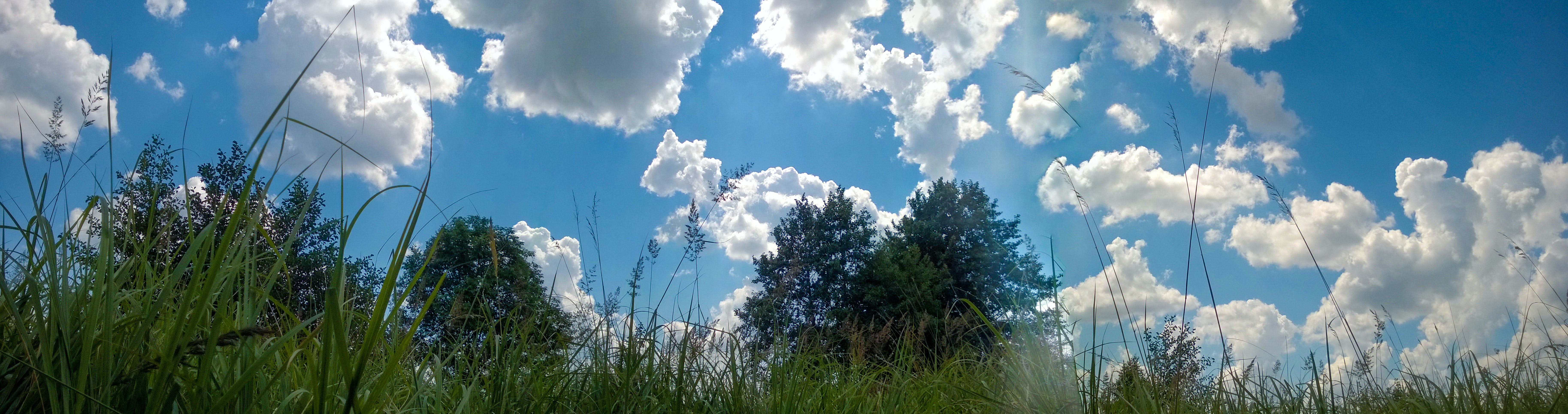 Free stock photo of cloud, forest, grass, nature