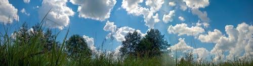 Fotos de stock gratuitas de bosque, césped, cielo, naturaleza