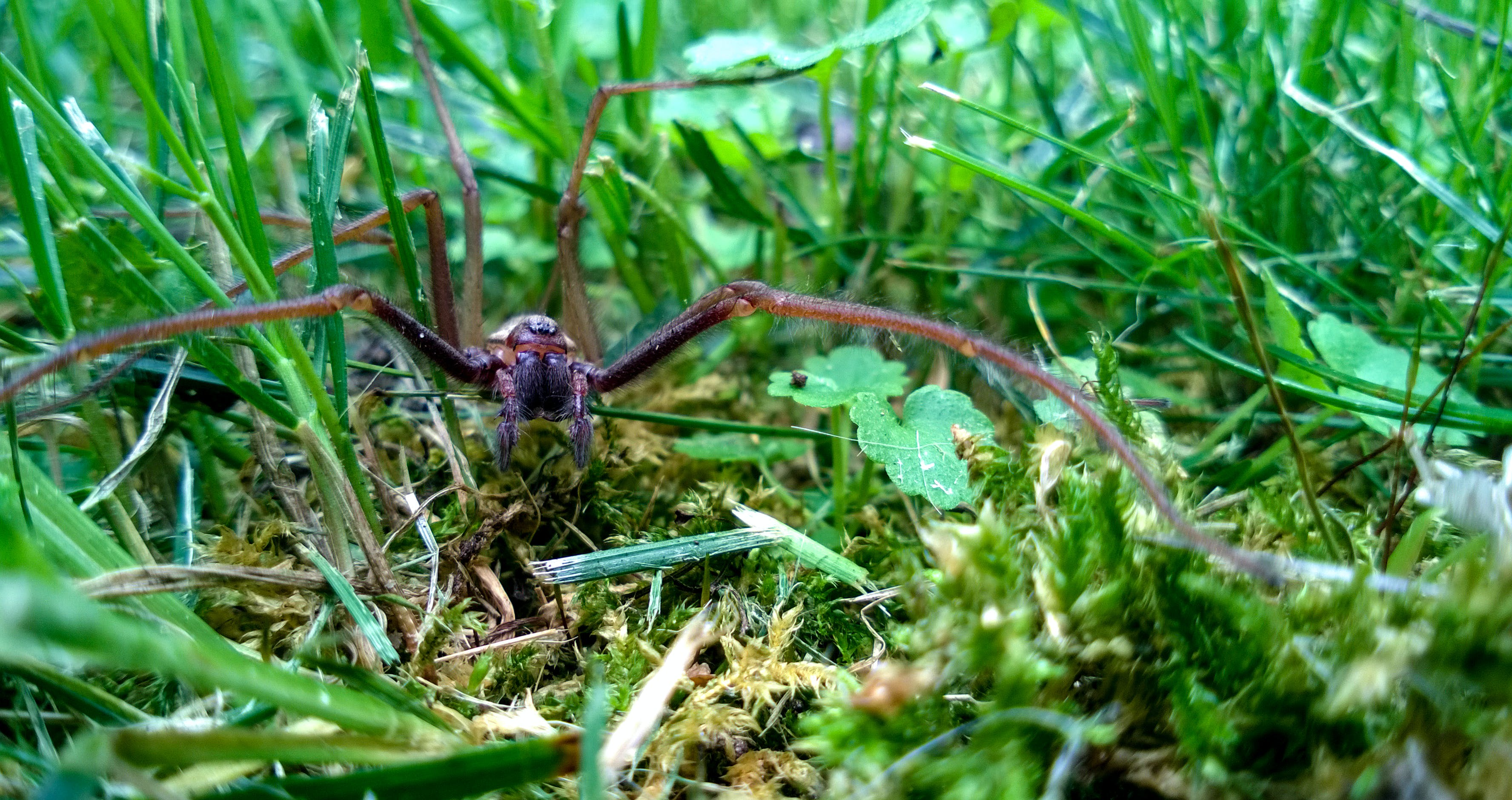 Free stock photo of forest, grass, nature, spider