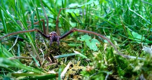 Imagine de stoc gratuită din codru, iarbă, natură, păianjen