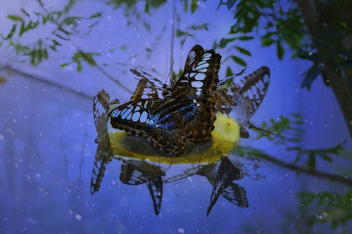 Бесплатное стоковое фото с бабочка, волшебный, голубой, лес