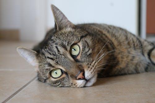 Brown Tabby Cat Lying on Brown Ceramic Tile Flooring