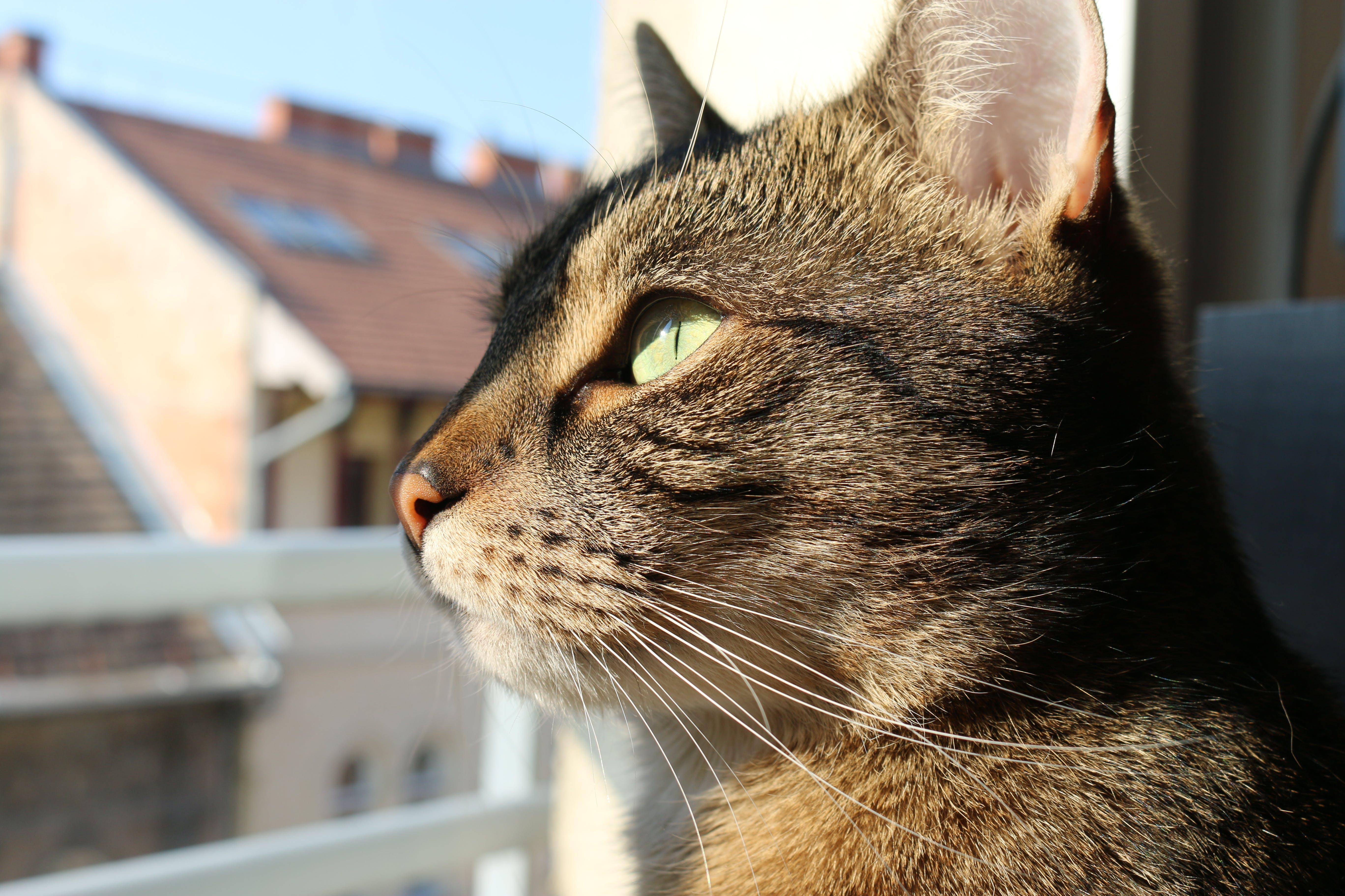Free stock photo of animal, cat, cats, city