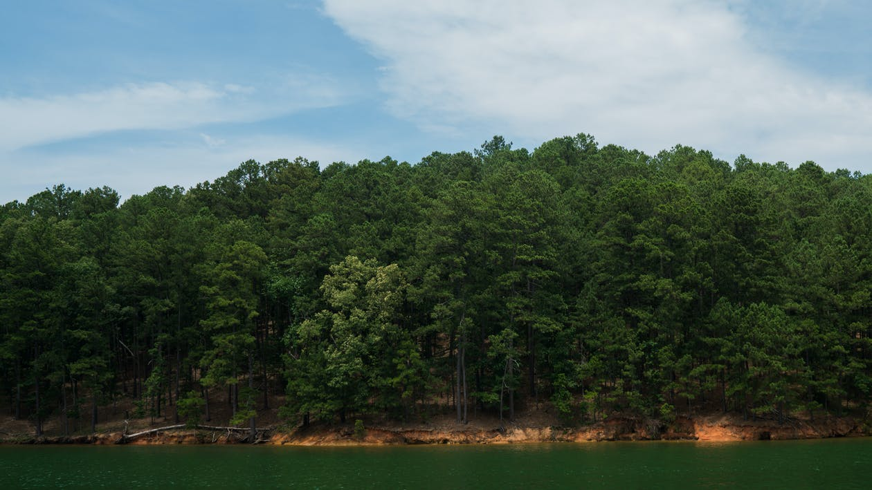Free stock photo of trees