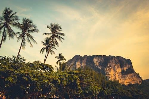 Základová fotografie zdarma na téma hora, Krabi, krajina, palmy