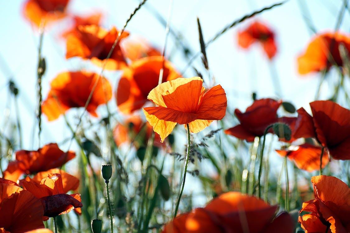 colorat, floare, floră