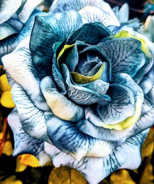 Kostnadsfri bild av blå, blå blomma, blå blommor, blomma
