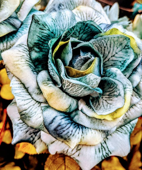 Kostnadsfri bild av blågrön, blomma, blommor, grön