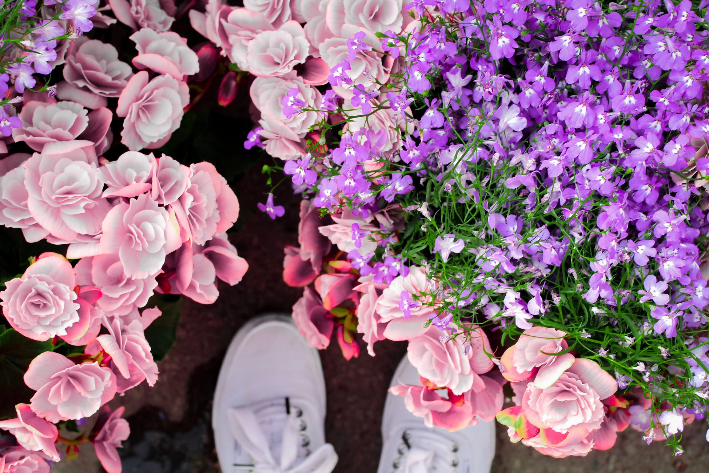 Free stock photo of flowers, garden, petals, shoes