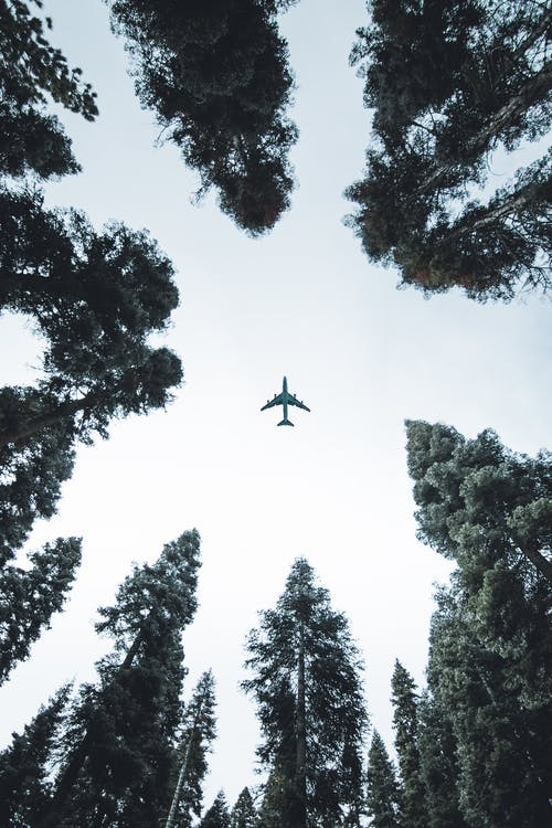 Photos gratuites de arbres, aviation, avion, ciel