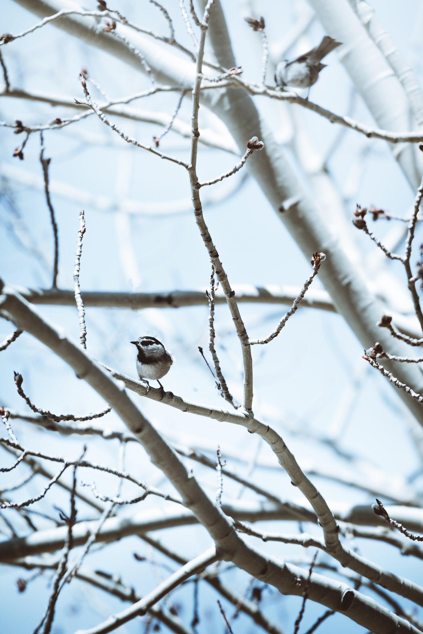 Photo of Birds Perched on Tree Branches