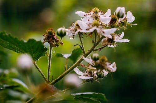 Immagine gratuita di estate, fiori, natura