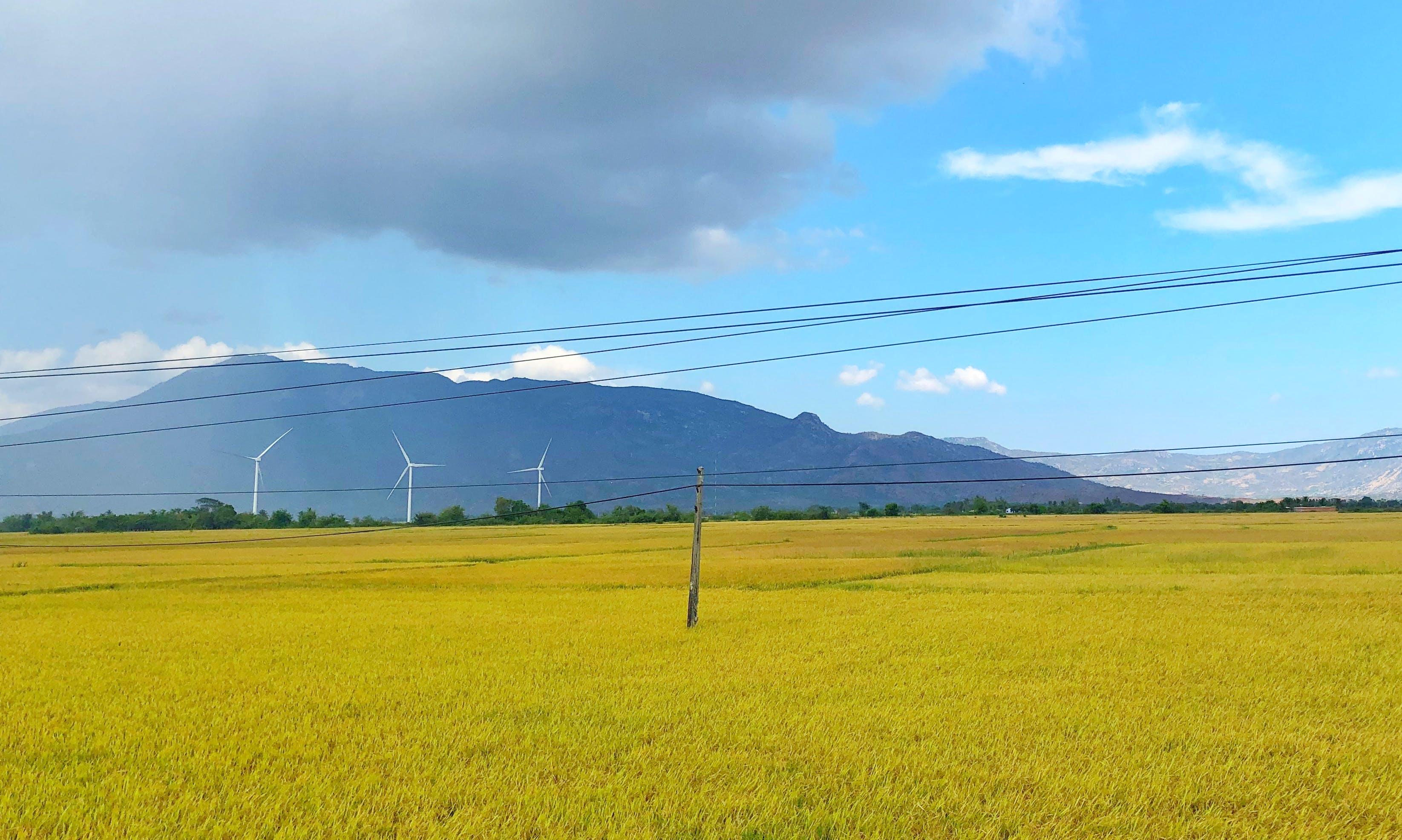Foto stok gratis bangsa, bidang, hayfield, hijau