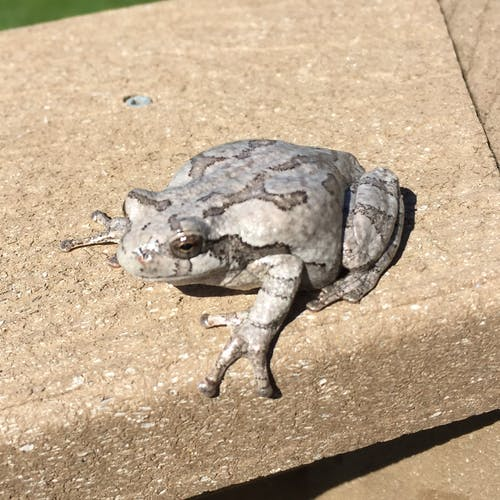 Free stock photo of toad