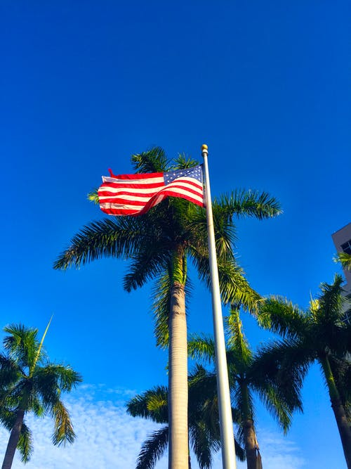 Free stock photo of American flag, palm trees