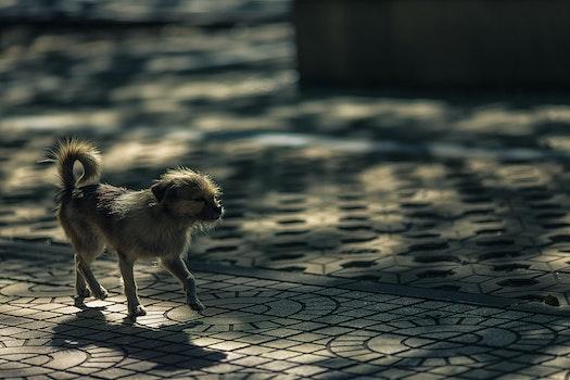Grey Coat Dog