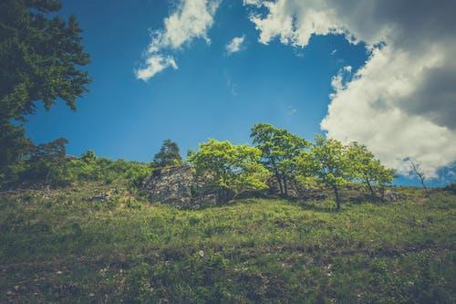 Photos gratuites de arbres, ciel, colline, herbe