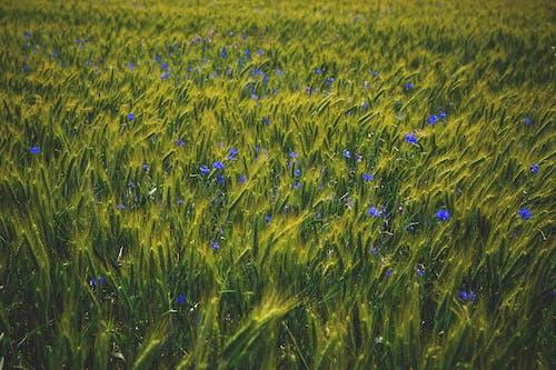 คลังภาพถ่ายฟรี ของ ดอกไม้, ธรรมชาติ, พฤกษา, สนาม
