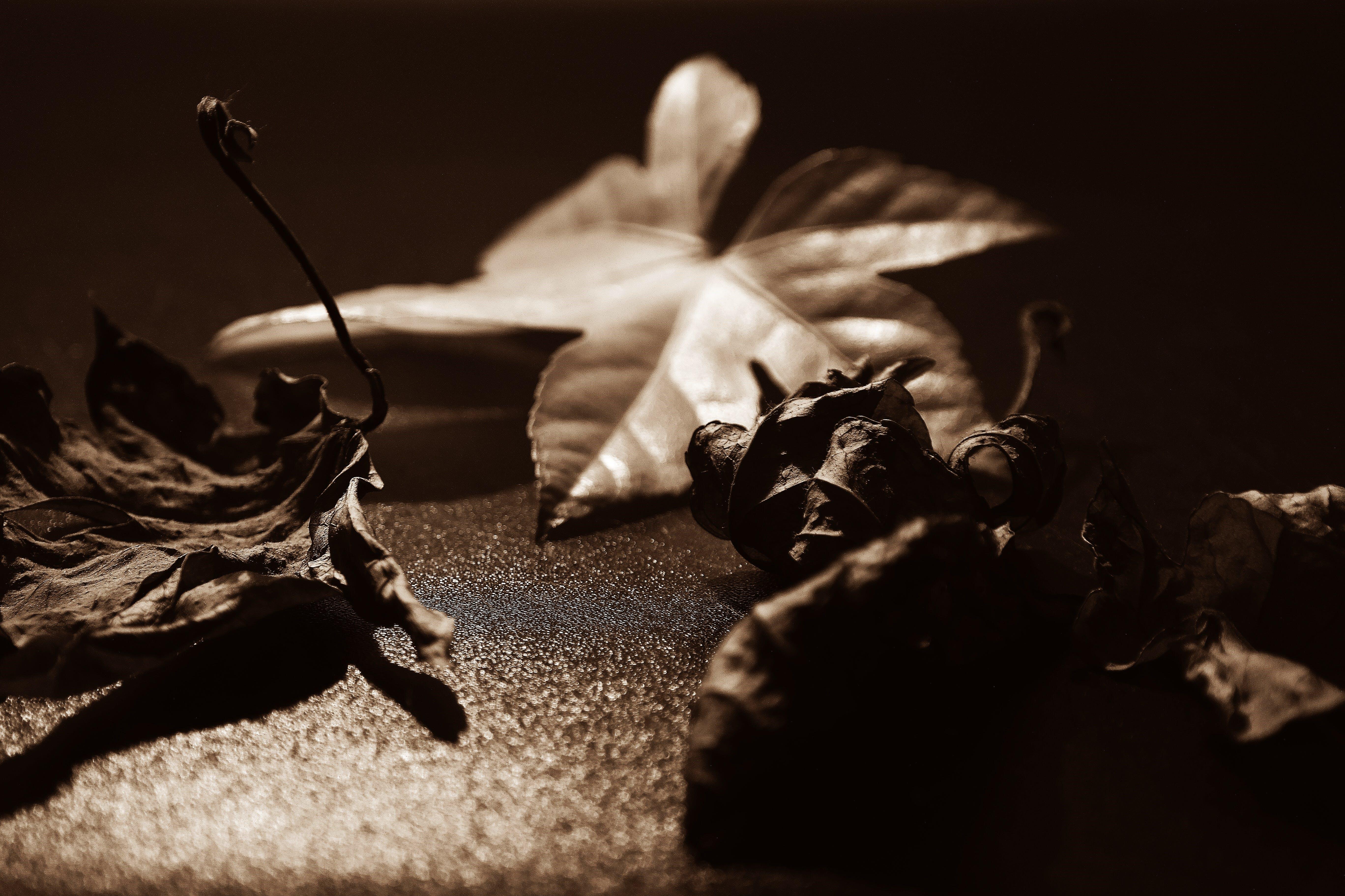 Darmowe zdjęcie z galerii z makro, suche liście